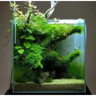 аквариум купить